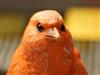 avatar de alainsuline