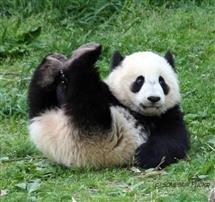 Avatar de Panda33