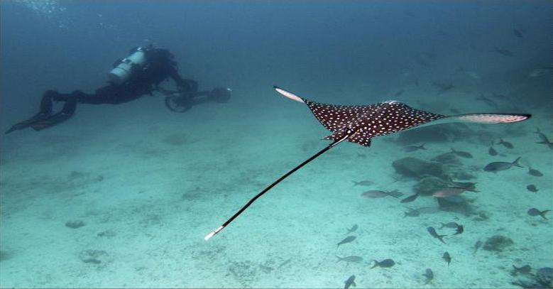 Catlin Sea Galapagos