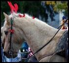 cheval troie noël libre