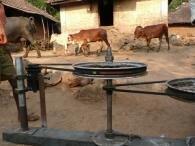 olpc vache bovin électricité