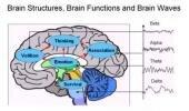 cerveau biométrie