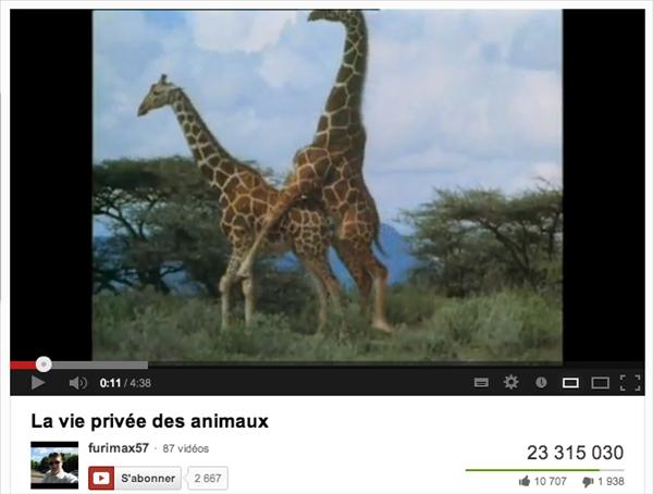 youtube animaux