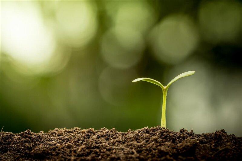 Jeune plant Terre