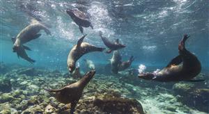 Galapagos Street View