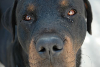 hadopi chien toutou décret application