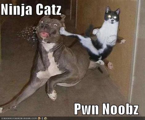 Ninja Cat Noobs Pown
