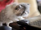 En plus des personnes, Google Photos identifie maintenant les animaux