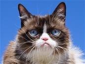 Grumpy Cat est morte...