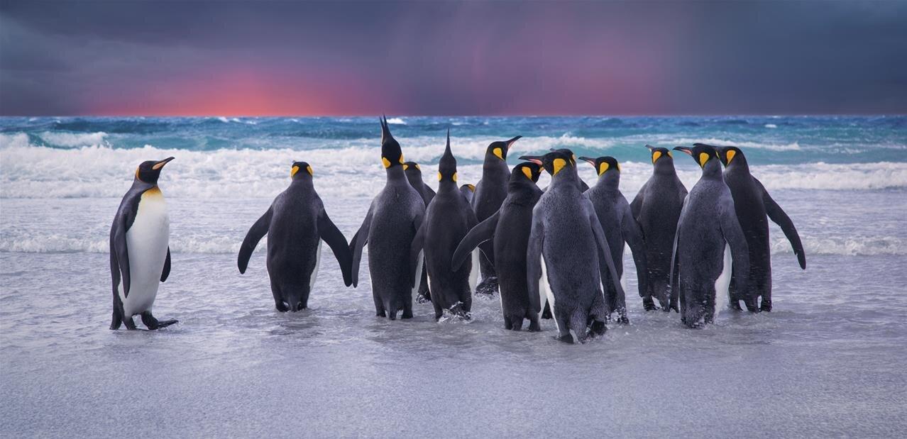 Le noyau Linux 5.2 améliore significativement le support matériel