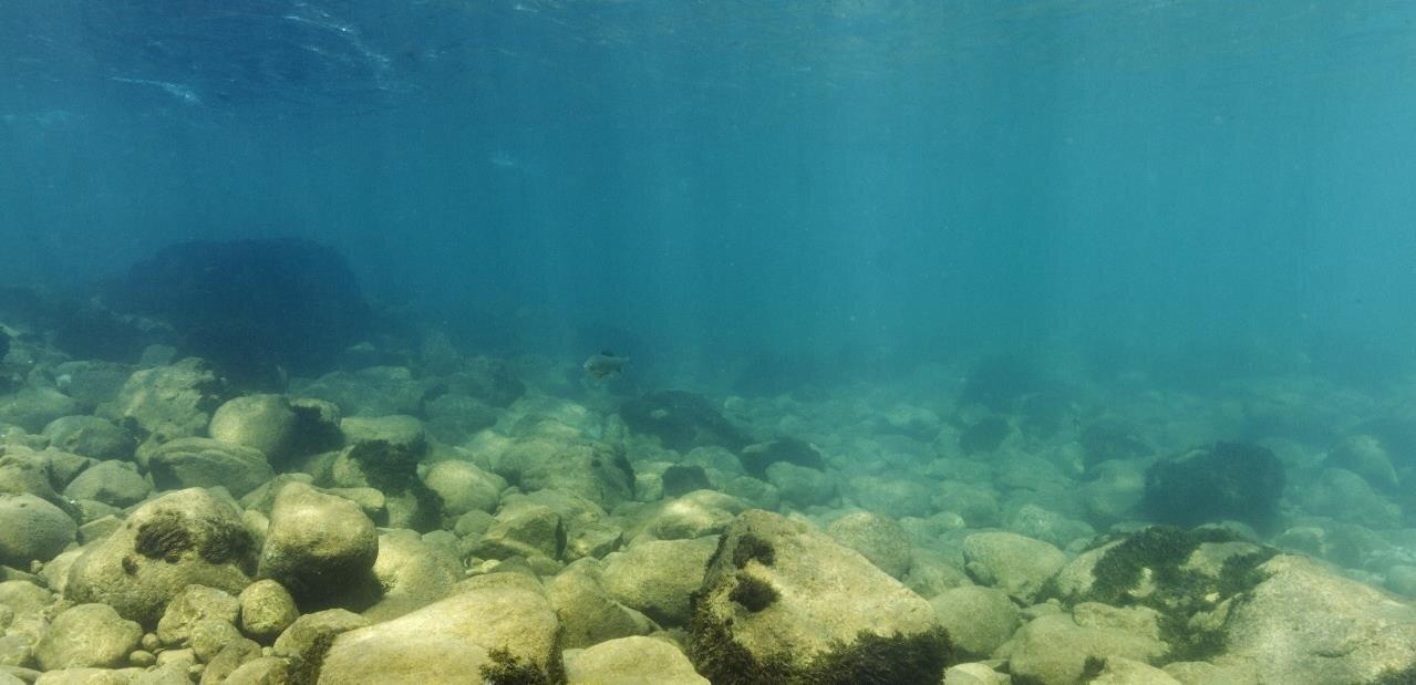 #Replay : océan de plastique, oracle de Delphes et dinosaures