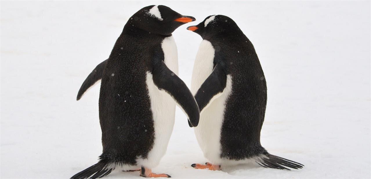 Scientific Linux va disparaître au profit de CentOS