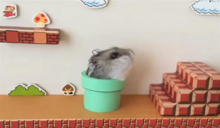 Un hamster fan de Super Mario Bros